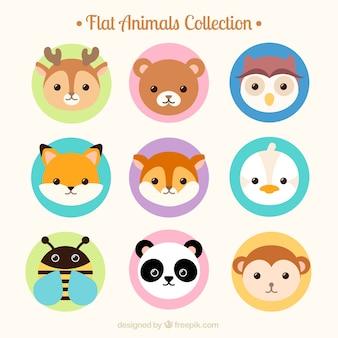 Linda coleção de animais avatar plana