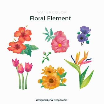 Linda coleção de elementos florais em aquarela