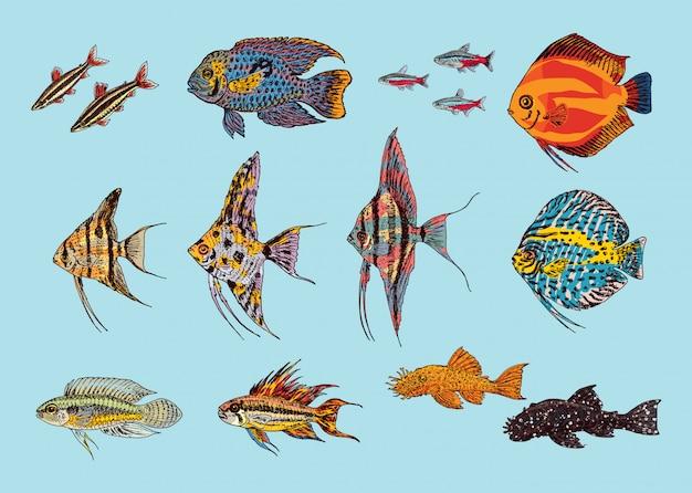 Linda coleção de peixes de aquário