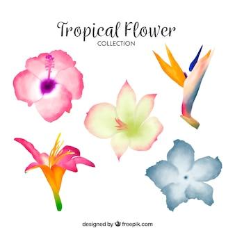 Linda colecção de flores tropicais em aquarela