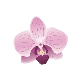 Linda flor de orquídea rosa pétalas da flor de cerejeira motivos da primavera vista frontal