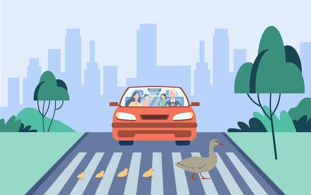 Linda mãe pato com crianças atravessando a estrada