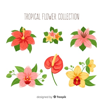 Linda mão desenhada coleção de flores tropicais