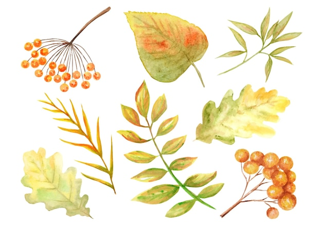 Lindas cores brilhantes conjunto de folhas de outono.