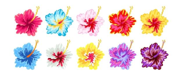 Lindas espécies de flores hibuscus no mundo