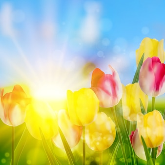 Lindas flores da primavera.