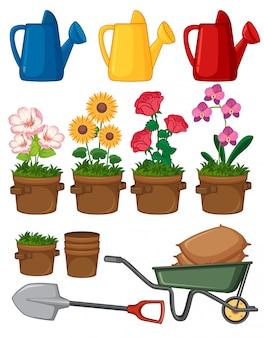 Lindas flores e ferramentas de jardinagem em fundo branco