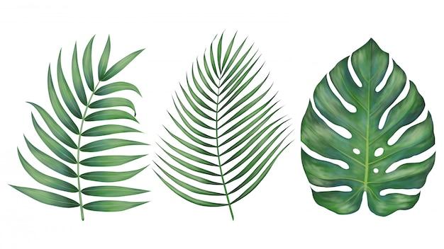 Lindas folhas tropicais