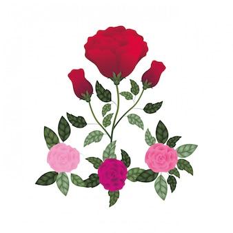 Lindas rosas com folhas ícone isolado