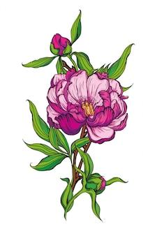 Lindo buquê artesanal de peônias rosa. ilustração
