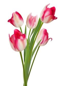 Lindo buquê de tulipas em um branco. eps10