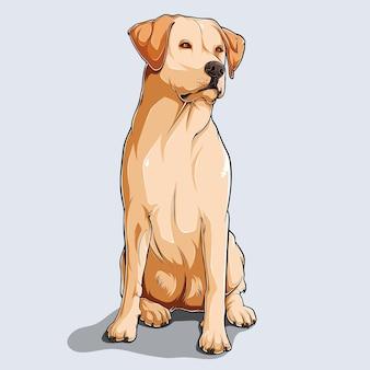 Lindo cão labrador retriever bege sentado, ilustrado com sombras coloridas e luzes isoladas no fundo branco