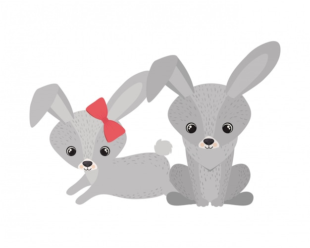 Lindo casal de coelhos