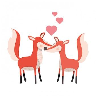 Lindo casal raposas com corações