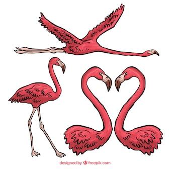 Lindo conjunto de mão desenhada flamingos