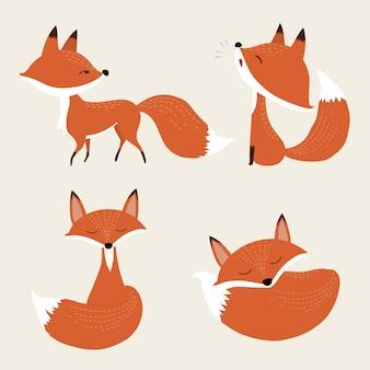Lindo conjunto de raposa.