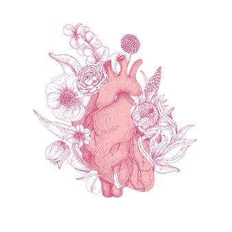 Lindo coração anatômico realista coberto com flores desabrochando de primavera desenhadas à mão com linhas de contorno rosa sobre fundo branco