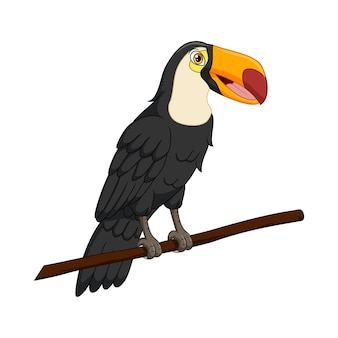 Lindo pássaro tucano em um galho de árvore