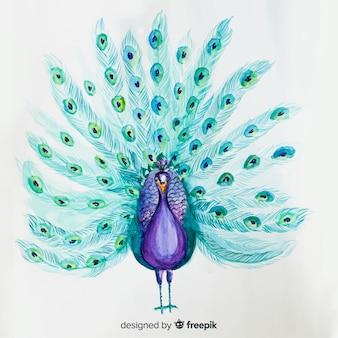 Lindo pavão aquarela