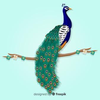 Lindo pavão