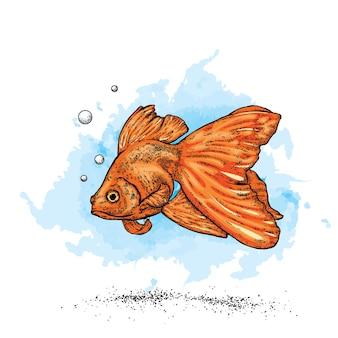 Lindo peixinho dourado e mar