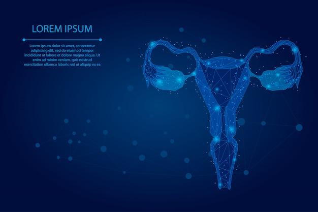 Linha de malha abstrata e ovários de ponto. órgãos reprodutivos femininos de baixo poli útero e ovários cuidados de saúde.