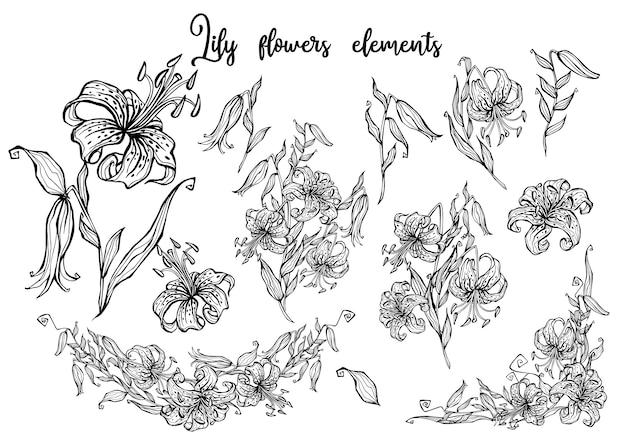 Lírio-tigre conjunto de elementos decorativos. gráficos de botânica.