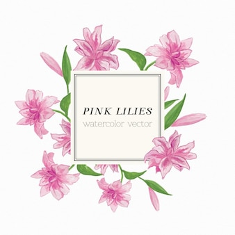 Lírios cor de rosa aquarela vector