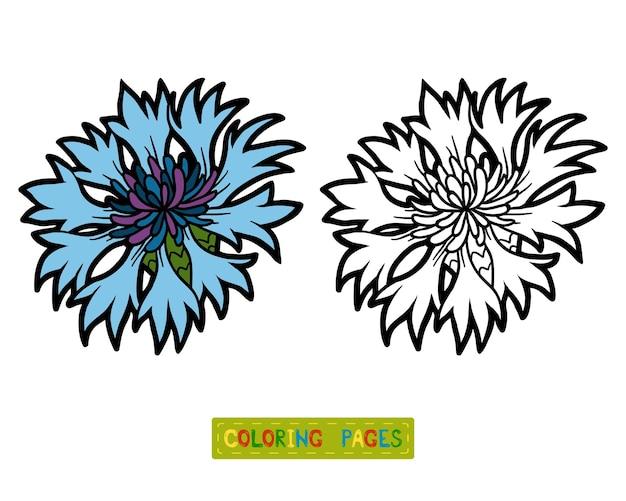 Livro de colorir para crianças, flor centáurea