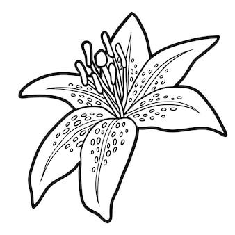 Livro de colorir para crianças, flor lily