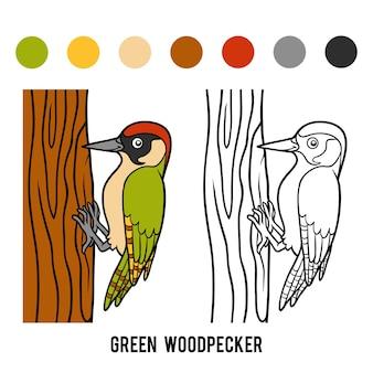 Livro de colorir para crianças, pica-pau verde