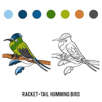 Livro de colorir para crianças, racket-tail hummingbird