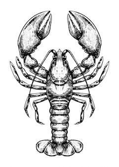 Lobster doodle