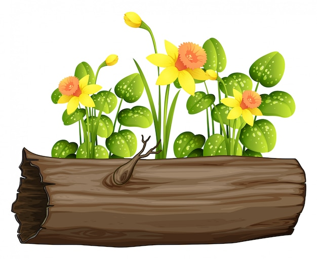 Log e flores de narciso amarelo