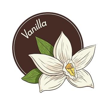 Logotipo da flor de baunilha e modelo do emblema. ilustração em vetor flor baunilha para logotipo, etiqueta, adesivos e estampas, menu, aroma, spa e design de produtos de cuidados de beleza. vetor premium