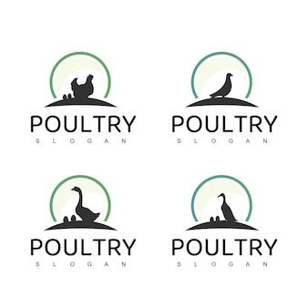 Logotipo de aves domésticas com símbolo de ganso, pato e galinha