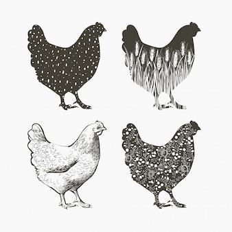 Logotipo de frango. vetorial, ilustração, em, vindima, estilo