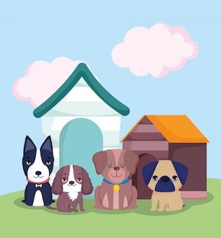 Loja de animais de estimação, cachorrinhos fofos sentados em diferentes raças e abrigos de animais domésticos