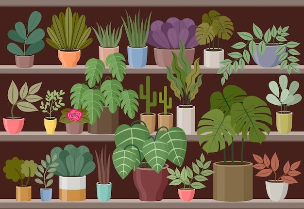 Loja de flores e plantas em casa.