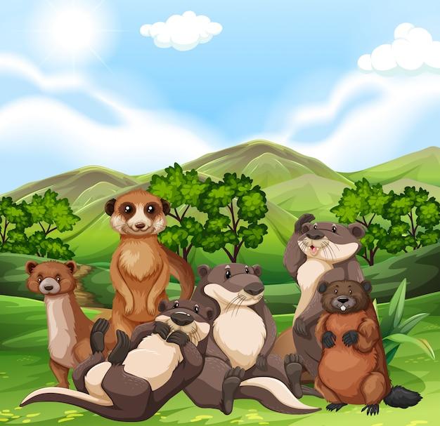 Lontras e castores no campo