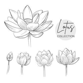 Lótus floral h desenho esboços grande conjunto coleção ornamento