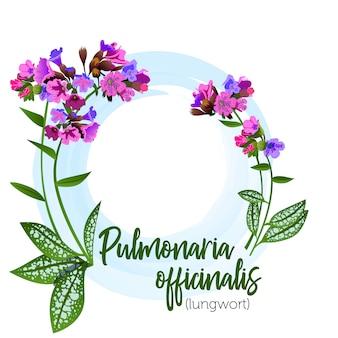 Lungwort de planta medicinal para rótulos