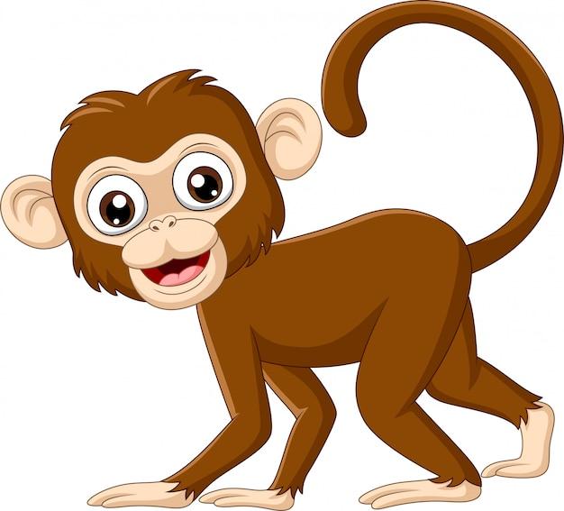 Macaco bebê fofo