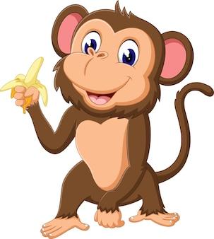 Macaco bonito segurando banana