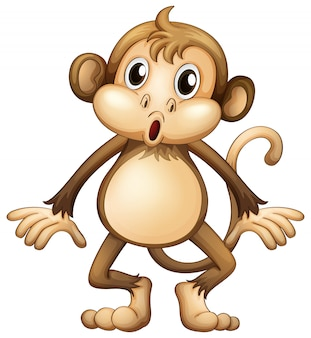 Macaco bonito sozinho