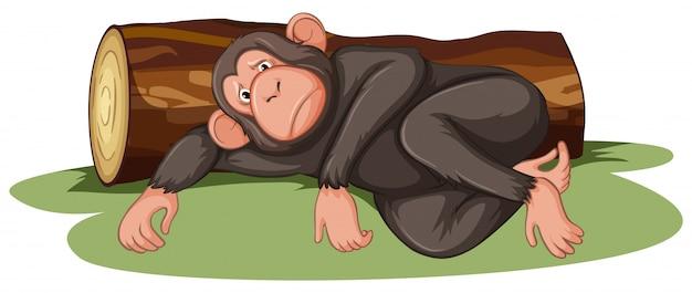 Macaco doente deitado pelo log