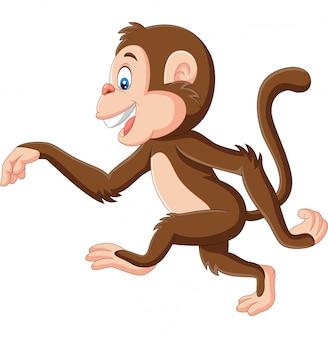 Macaco engraçado dos desenhos animados, andando no fundo branco