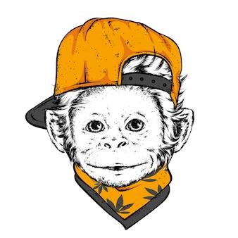 Macaco engraçado usando boné e óculos
