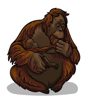 Macaco fêmea animal asiático do orangotango com o assento do bebê-macaco isolado no estilo dos desenhos animados. ilustração educacional de zoologia