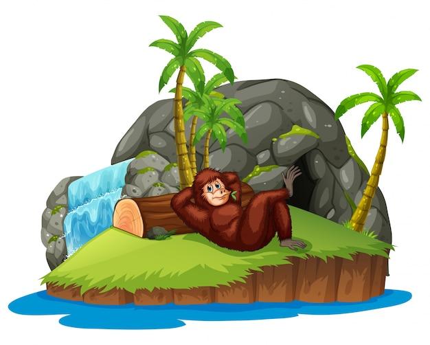 Macaco na ilha